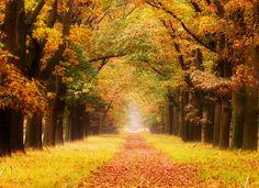 Parco nazionale De Hoge Veluwe