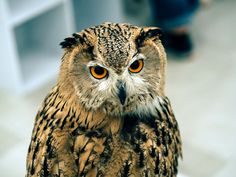 Owl cafe - Japan for animal lovers