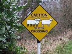 Sheep sign in Ireland