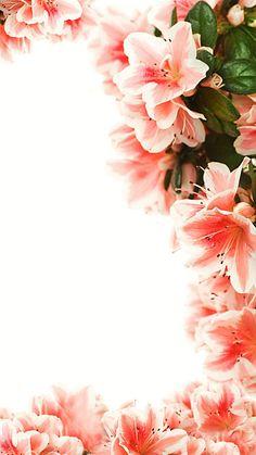 I Fiori sullo sfondo Rosa Flower Background Wallpaper, Flower Phone Wallpaper, Flower Backgrounds, Wallpaper Backgrounds, New Background Images, Iphone Homescreen Wallpaper, Abstract Iphone Wallpaper, Live Wallpaper Iphone, Witchy Wallpaper