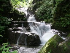 Oirese River, Japan.  It flows out of Lake Towada.  Beautiful walk.
