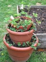 Garden Styles - Container Gardening, Ingenuity at Work. Blooming Radishes, Sustainable Living. Garden. Food Preservation. Canning.
