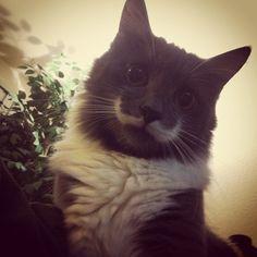 I ❤ Mustache Cat