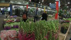 The UK's largest specialist flower market is moving for the third time in its 347-year history.