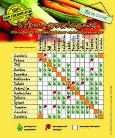 Der ultimative Pflanzplan für euer Gemüse! Viele Gemüsesorten vertragen bestimmte Nachbarschaften mit anderen Gemüsen nicht. Aber auch umgekehrt...