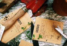 Starting Seeds Indoors, Love Garden, Seed Starting, Bamboo Cutting Board, Falling In Love, Bloom, Make It Yourself, This Or That Questions, How To Make