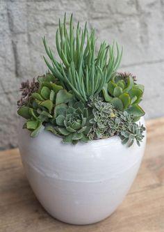 Beauty Succulents Pots Arrangement Tips 45 #RockGarden #ContainerGardening