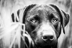 Bildergebnis für schwarz weiss fotos Hunde