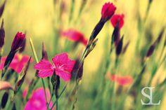 Sommergefühle - Blüten in Pink