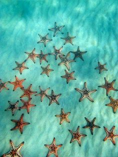 Star fish part of the Echinoderm family