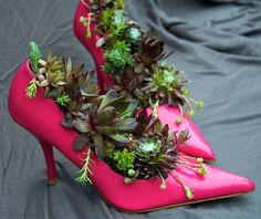 Here's the how to on this.  Pictures of Succulent Plants in Pots: Hens and Chicks Strut Their Stuff in Pink Stilettos