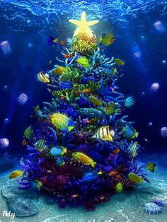 Nature under the sea on pinterest sea slug sea for Bill engvall dork fish