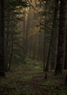 Dark Forest | Flickr - Photo Sharing!