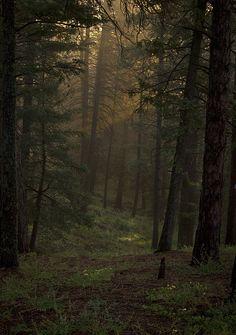 Dark Forest   Flickr - Photo Sharing!