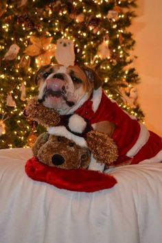 ❤ Adorable! ❤ Posted on Baggy Bulldogs