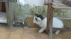 Animated Animal Haiku – Kittens Playground, Edition! | Anguished Repose
