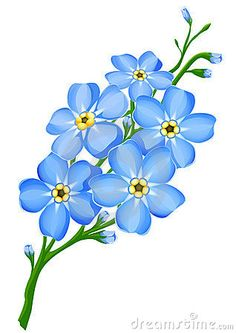 Gt Stock Photography Branch Of Blue Forget Me Not Flowers Isolated