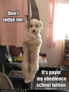 funny dog pictures - Sure it is; that's what they all say!