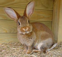Surprised rabbit
