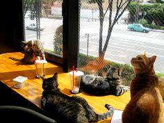 Koneko Darling: Travel Tips: Cat Cafe in Kyoto City