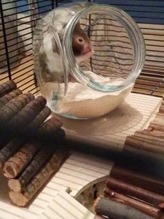 – Hamster Central – Best Baby And Baby Toys Habitat Du Hamster, Hamster Diy Cage, Diy Hamster Toys, Gerbil Cages, Hamster Life, Dwarf Hamster Toys, Hampster Cage, Robo Dwarf Hamsters, Pets