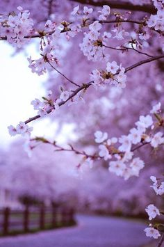 Flowers Spring Photography Cherry Blossoms Nature 51 Ideas For 2019