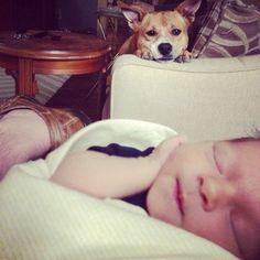 Perro vigilando al bebé.