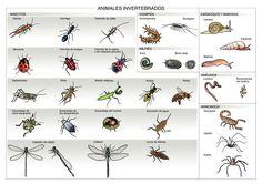 Infografía de los animales invertebrados