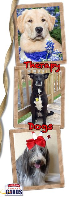 Is your dog a Therapy Dog? Many of our customers hand our trading cards to the places they visit whether it is hospitals rest home or library dogs. We will work wit you on a design for your organization. www.customsportscards.com