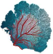 algues et coreaux dessins - Recherche Google