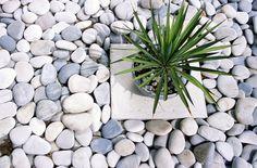 Ideias de decoração zen. Plantas