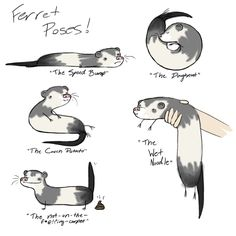 ferret poses! Oh how I miss my Fletcher!