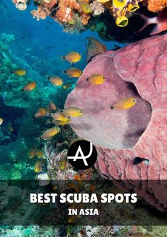 Best dive spots in Asia