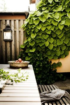 "Daniella Witte: ""BAKOM PORTEN TILL GRÖNSKAN"" (love the leafy vines growing down the wall. Cool.)"