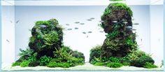 Lost island www.ibrio.it your aquarium born here ! il tuo acquario nasce qui ! https://www.facebook.com/ibrio.it #ibrio #acquario #acquari #acquariologia #acquariofilia #aquarium #aquariums #piante #natura #pesci #zen #design #arredamento #layout #layouts #layoutdesign #roccia #roccie #moss #freshwater #plantedtank #aquadesignamano #tropicalfish #fishofinstagram #aquaticplants #natureaquarium #nanotank #reefkeeper #nanoreef #saltwateraquarium