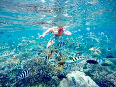 One for the underwater adventurers, here are 7 of the best snorkelling spots in Bali that you'll definitely want to explore, from Tulamben, Nusa Penida, and Nusa Lembongan, to Padangbai, Amed and Menjangan.