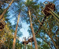 Red Mountain Park | Hiking Trails, Scenic Overlooks, Zip Lines, & Beanstalk Forest