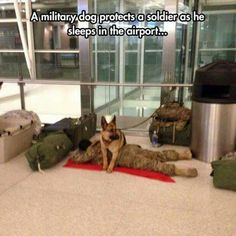 I love soldiers and I love dogs. Dogs rule!