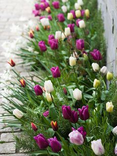 Springtime Beauty  Color combinations can be formal, with colors blocked out and clearly separated, or a more relaxed mix. Thats the case with this pretty border of tulips, which neatly softens the space between a stone pathway and brick wall.
