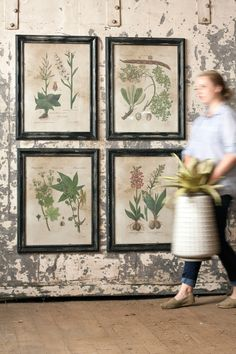 """Botanical Print Collection-Inspired by vintage flower specimen illustrations, this set of four prints comes framed and under glass. Each frame and print feature aged texture for a rustic look that is charming and understated. Each Botanical Print measures 22½"""" x 28½""""t"""