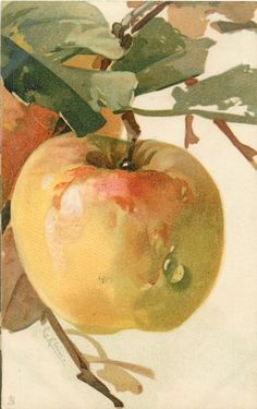 Large apple by Catherine Klein ~ 1910.