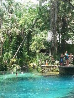 Juniper Springs a Florida Favorite