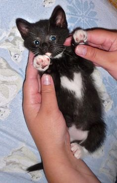 I ♥ this baby....black kitty with white heart