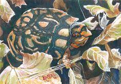 Bill Kassel Fine Art Studio: Finished: Hanging Out - Eastern Box Turtle
