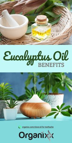 Eucalyptus Oil Benefits: The Enticing Essential Oil From Down Under