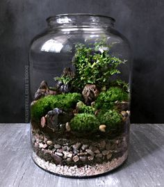 A large glass jar houses a miniature landscape made up of several varieties of live moss. Accented by fern fronds and petrified wood, the tiny garden is set atop a bed of layered stones and soil. Terrariums are easy to care for and require only minimal watering and indirect light. Each piece comes with complete care instructions and free mini spray bottle for easy watering. FEATURES: • One (1) pre-assembled terrarium (includes lid) • Easy care; spray with filtered water • Comes with…