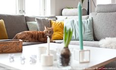 Livingroom and cat