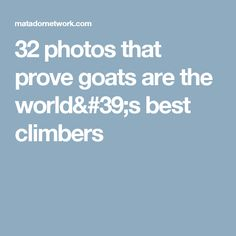 32 photos that prove goats are the world's best climbers