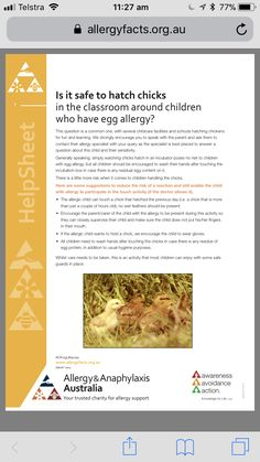 Hatching eggs at school https://allergyfacts.org.au/images/pdf/chickensclassroom.pdf