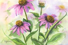 Beautiful Cone Flower (Echinacea) watercolor painting by Linda Young ****